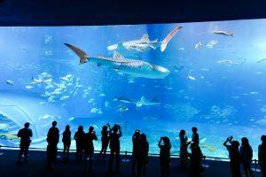 aquarium-1042371_960_720