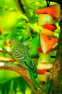 bird-616873_960_720
