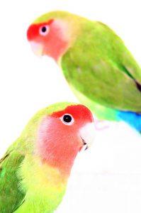 birds-288547_960_720