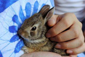 bunny-968856_960_720