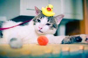 cat-931969_960_720