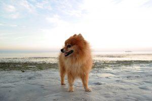 dog-1450447_960_720