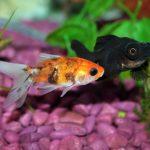 熱帯魚の飼い方、飼育に必要なもの!水槽の大きさの選び方