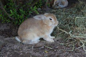 rabbit-1174664_960_720