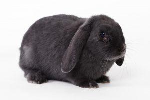 rabbit-694919_960_720