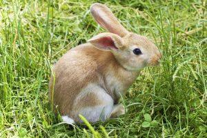 bunny-837443_960_720