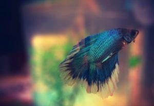 fish-622993_960_720