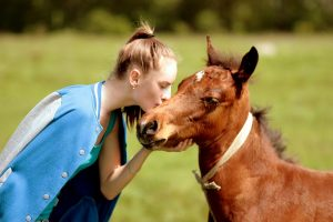 horse-1354791_960_720