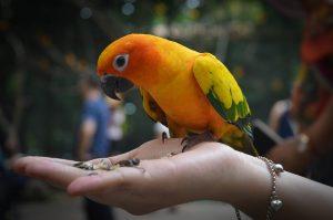 parrots-1149970_960_720