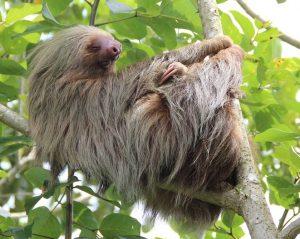 sloth-1041855_960_720